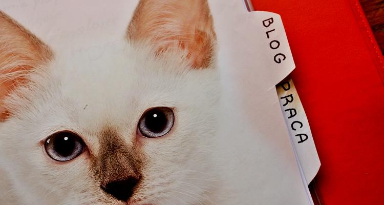 przekładki kot segregator
