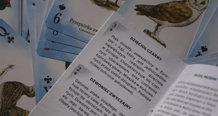 Dzikie ptaki Polski